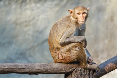 Mother monkey sitting on a tree branch. Stock Photo
