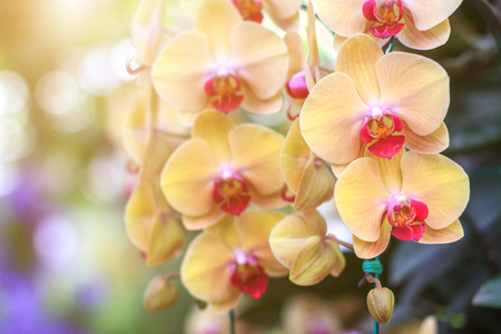 Orchid flower in the garden at winter or spring day for postcard beauty and agriculture idea concept design. Orchids are export business products of Thailand that make a lot of money.