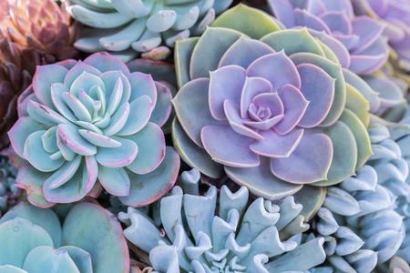 Piante grasse o cactus nel giardino botanico del deserto per la decorazione e il design agricolo. Archivio Fotografico