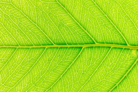 Green leaf pattern texture background with light behind for website template, spring beauty, environment and ecology design. Imagens