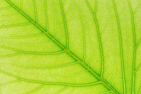 Groene blad patroon textuur achtergrond met licht achter voor website sjabloon, lente schoonheid, milieu en ecologie design. Stockfoto