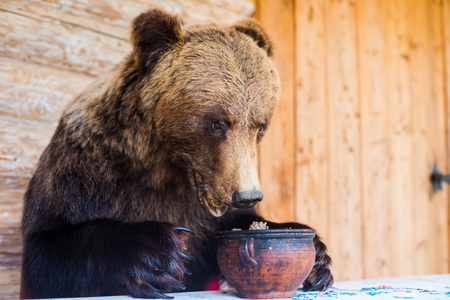 brown bear: Stuffed bear sitting at a desk and looking into the pot Stock Photo