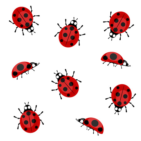 Ladybugs in different positions on a white background
