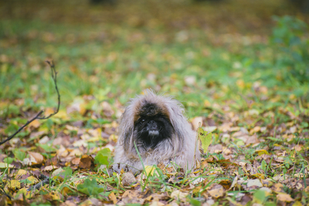 funny dog in the autumn foliage