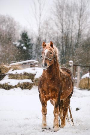 雪の上に馬が立っている 写真素材