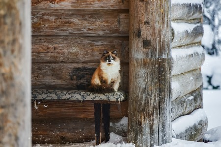 cat sits on the background of the wooden structure Banque d'images
