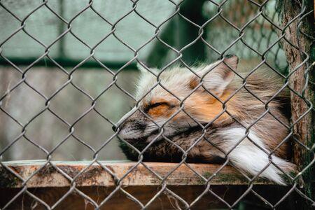 fox behind the metal grid