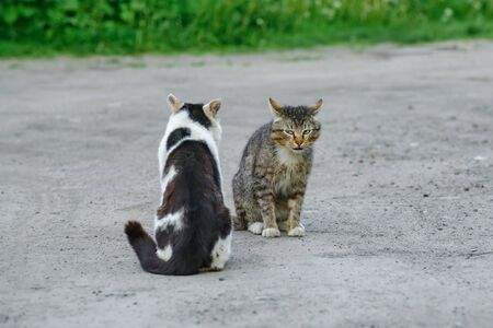 two stray cats on the street Stock Photo