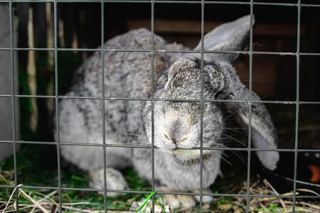 rabbit in a cage at shallow depth of field Stock Photo