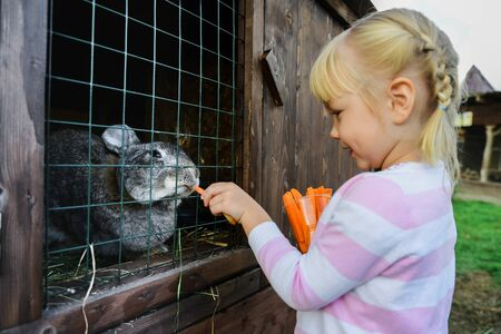 girl feeds a rabbit at shallow depth of field Stock Photo