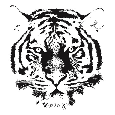 head shape: Tiger head Vector