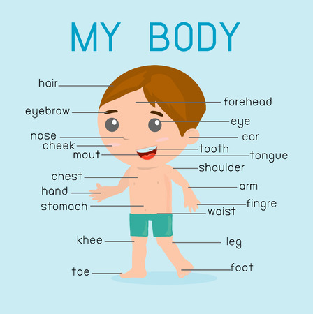 naked male body: My body Illustration poster of the parts of the body for kids, With pointers and labels on separate layers. Illustration