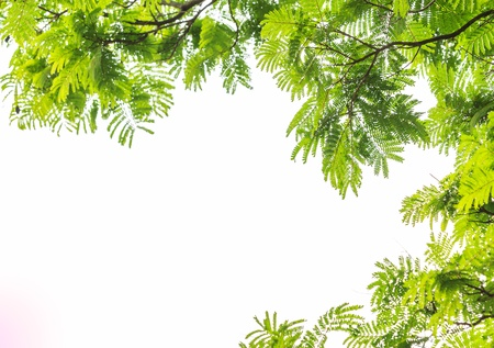 Green leaf frame  and white  background. Stock Photo