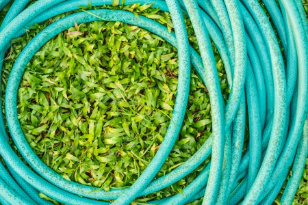 Cerulean rubber tube on green grass  Stock Photo