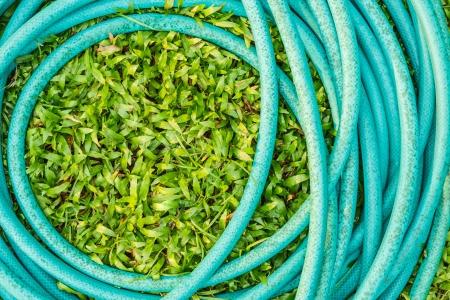 garden hose: Cerulean rubber tube on green grass  Stock Photo