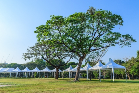 events marquee tent and big tree photo