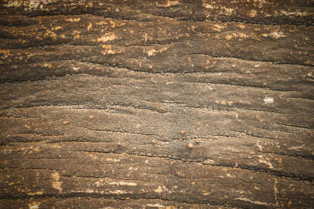 close up background of wood  texture Stock Photo - 18819764
