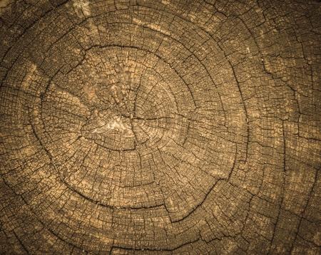 close up wood cut texture Stock Photo
