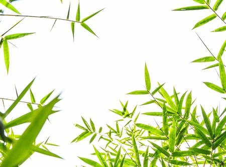 bamboo leaf isolate on white background Stock Photo