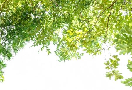 Green leaf frame and white background