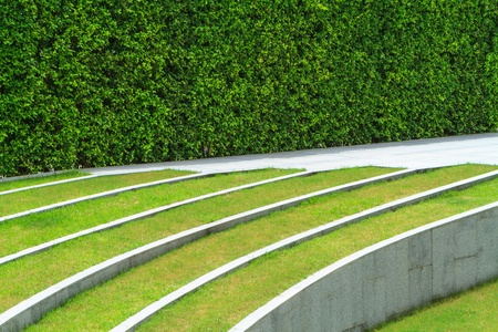 green grass and white line with space