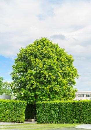 green tree in decorative garden