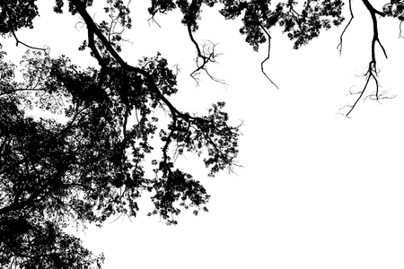 silhouette tree on white background space for text Stock Photo