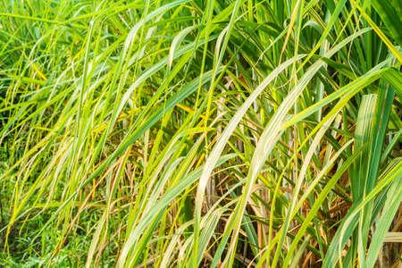 Close-up fresh green grass blades a background. photo