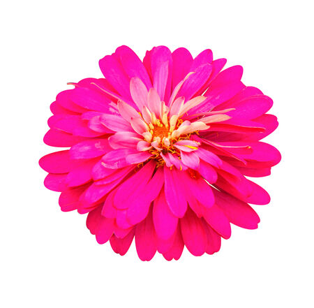 pink gerbera isolate on white background Stock Photo