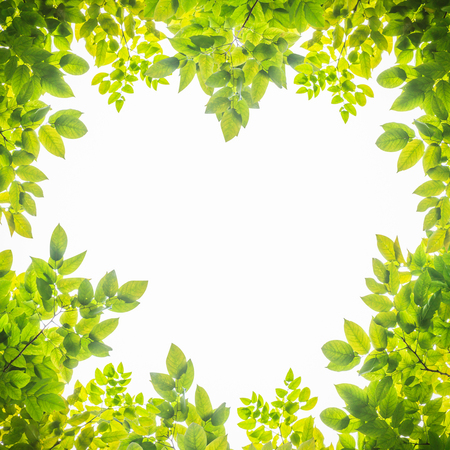 Leaf freme heart shape isolate on white background Stock Photo