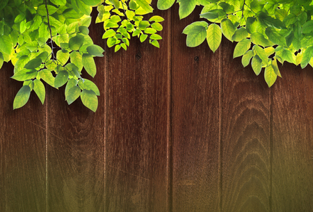 green leaves frame  on wood background