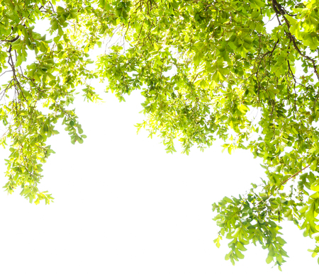 green leaves frame on white background