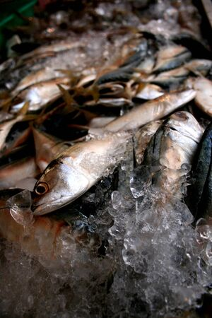 indopacific: fish