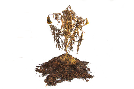Dried plant on white background