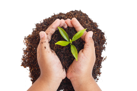 hands holding soil and young plant  Ecology concept Stock Photo
