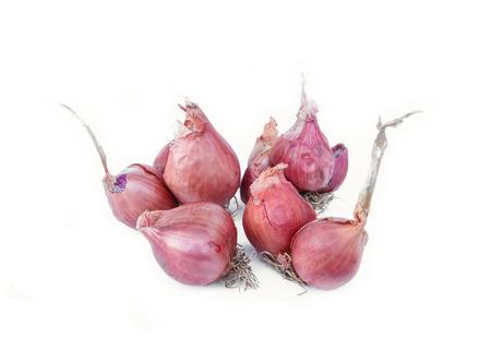 shallot: Shallot onions isolated on white background