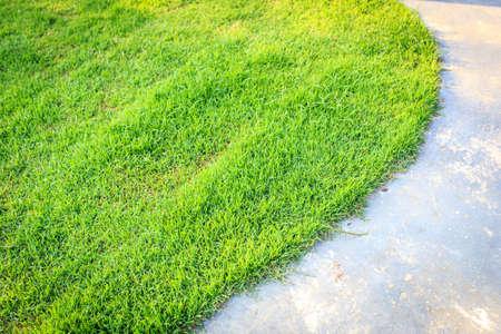 sidewalks: stone way in green grass