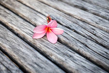 Flower on wood photo