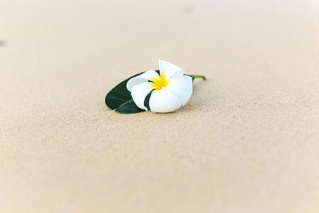 White flower, Plumeria flower or Frangipani on the beach photo