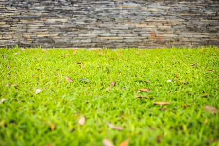 Close up green grass in garden with black slate wall photo