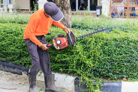 A man trimming hedge at the street Stock Photo