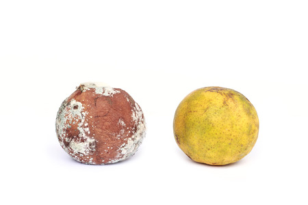 Moldy orange isolated over white background photo