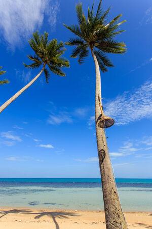 Coconut tree beside the beach photo