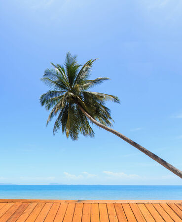 Coconut tree at tropical beach photo