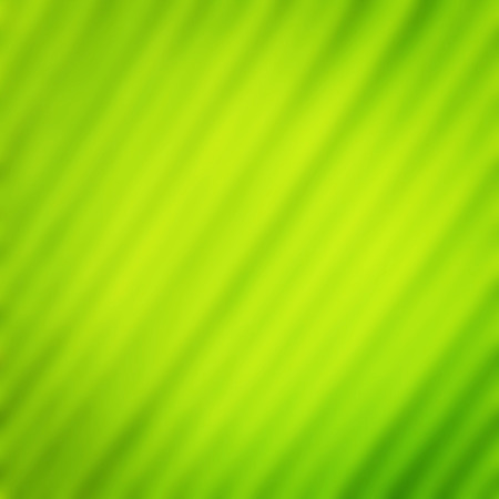 Green leaf blur for natural background photo