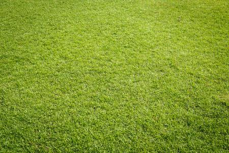 grass background: Green grass texture in  golf court