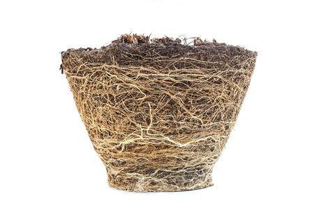 raices de plantas: La textura de la ra�z de la caja de la planta