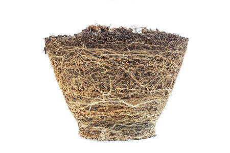 plant roots: Texture of root from plant box