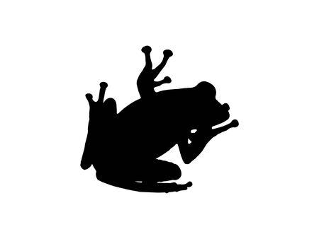 anura: Silueta de Anura o rana aislado en fondo blanco Foto de archivo