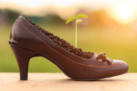 crecimiento planta: Crecimiento de la planta joven en zapato de la se�ora